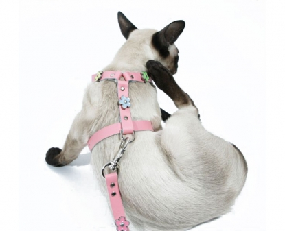 Cat/Puppy Harness